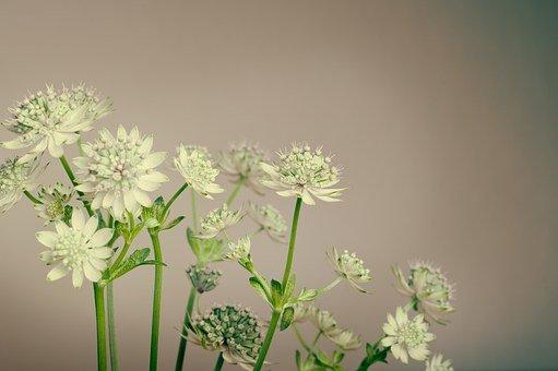 Qu'est ce que le métier de fleuriste ?