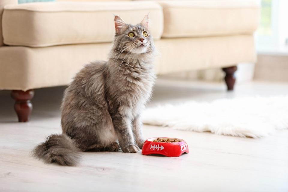 Comment nourrir un chat adulte ?