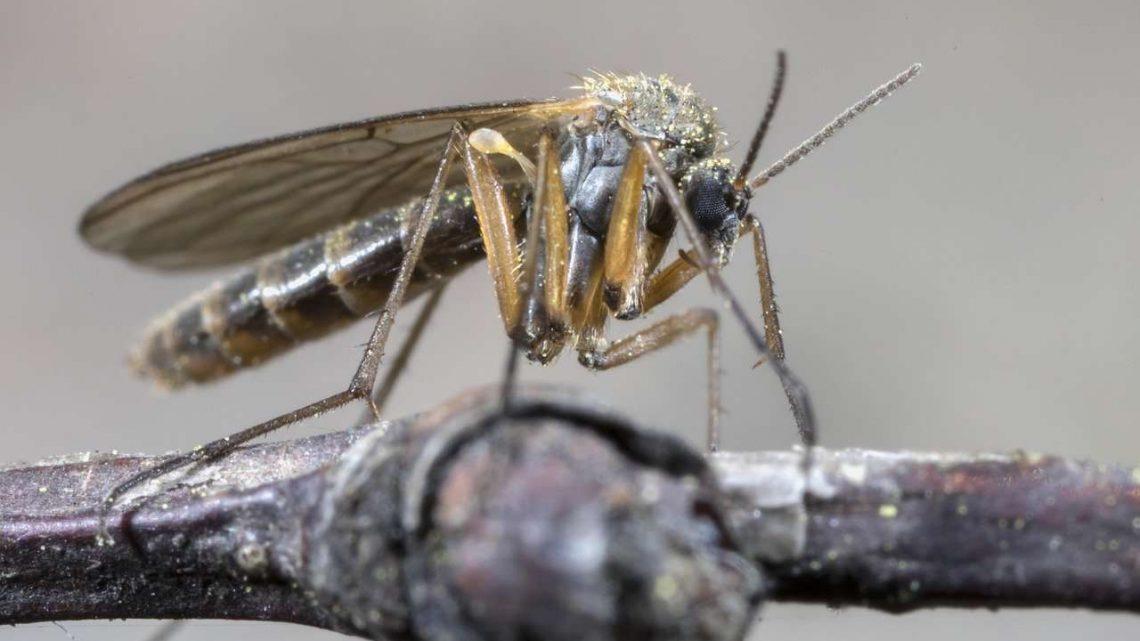 Quel est le meilleur répulsif anti-moustiques ?
