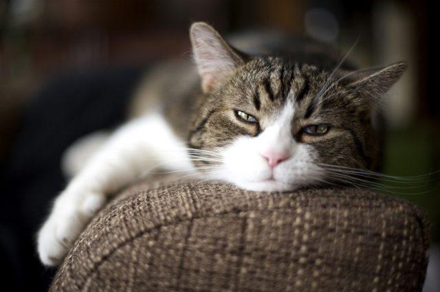 5 signes que votre chat est malade