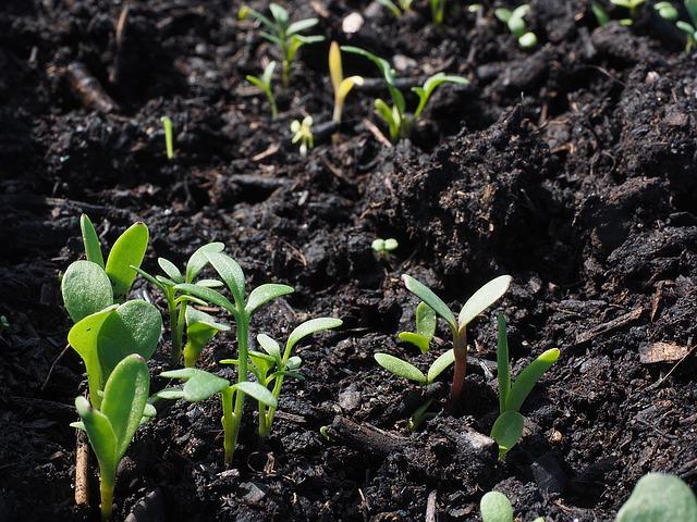 Quel terreau choisir en jardinerie ?