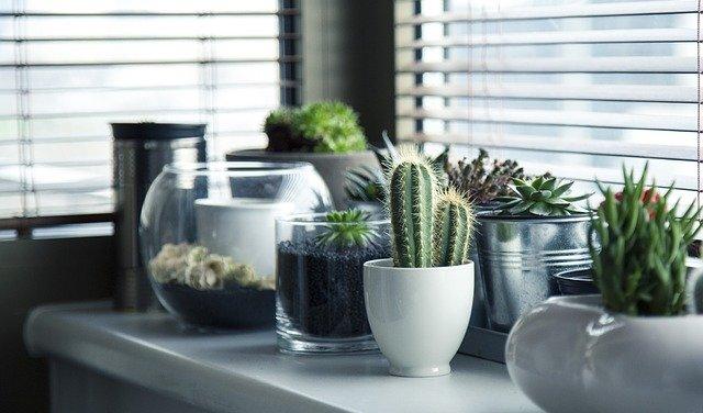 Comment bien choisir une plante en jardinerie ? Pépinières, jardineries, des conseils adaptés pour vos espaces-verts